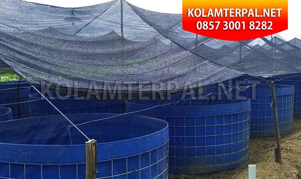 contoh kolam terpal untuk budidaya ikan lele