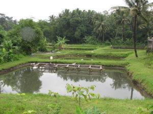 kolam-tanah