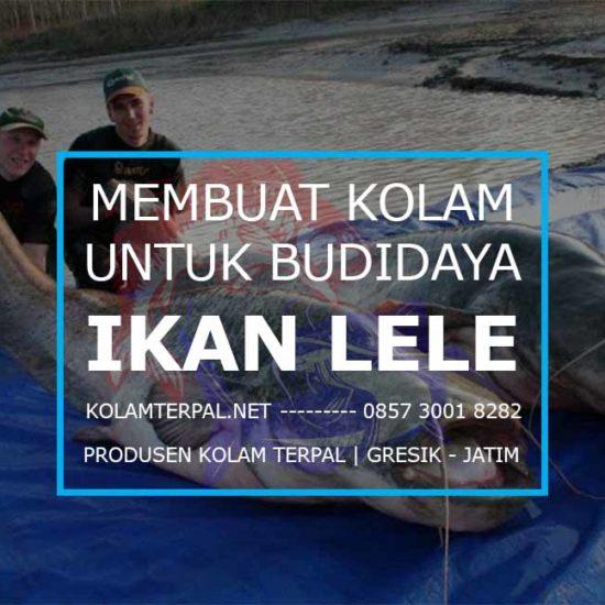cara membuat kolam untuk ternak ikan lele