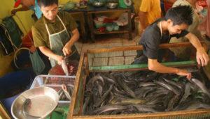 penjual-ikan-lele-segar