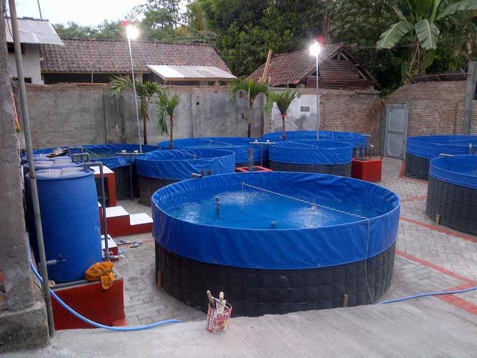 Kolam Terpal untuk Budidaya Ikan Patin
