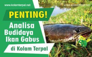 Analisa Budidaya Ikan Gabus Metode Kolam Terpal