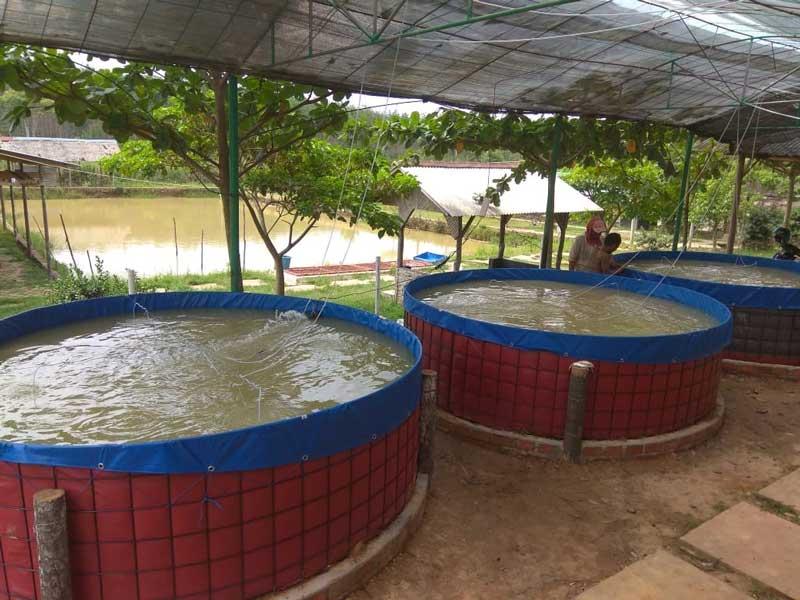 Harga Kolam Terpal Bulat untuk budidaya vaname 0857-3001-8282