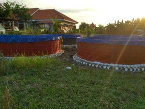 kolam khusus vaname
