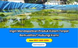 Belajar Budidaya Ikan Lele di Kolam Terpal - Lingkungan Hidup Ikan Lebih Bagus