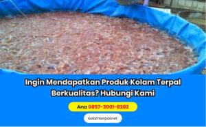 Budidaya Ikan Lele Red Water System - Hal Yang Harus Dipersiapkan
