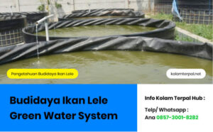 Green Water System