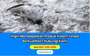 Hal yang Harus Diperhatikan dalam Pembesaran Ikan Lele