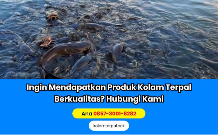 Keuntungan Budidaya Ikan Lele Sektor Pembesaran