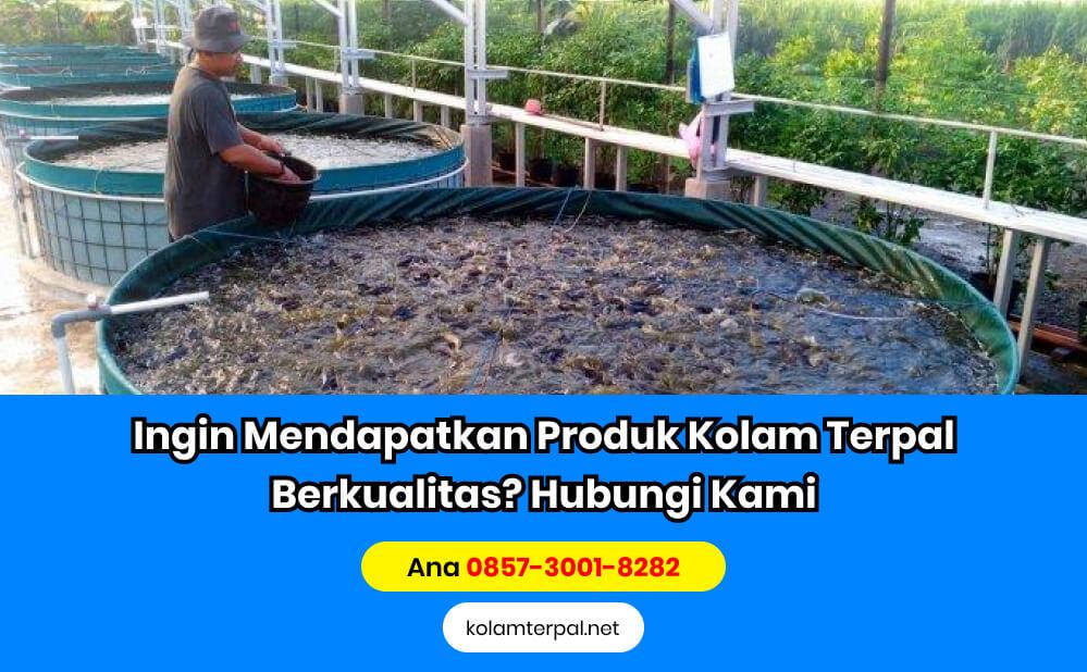 Persiapan Budidaya Ikan Lele - Cara memberi pakan ikan lele yang benar