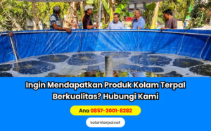Persiapan Kolam Budidaya Ikan Lele